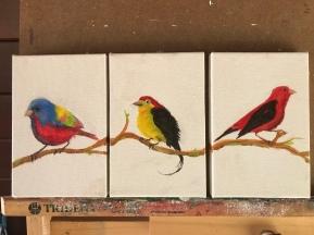Pássaros set 02